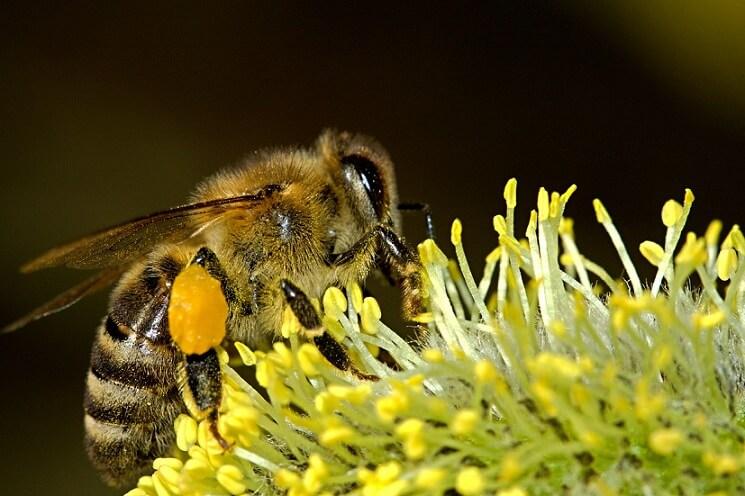 viata-albinelor